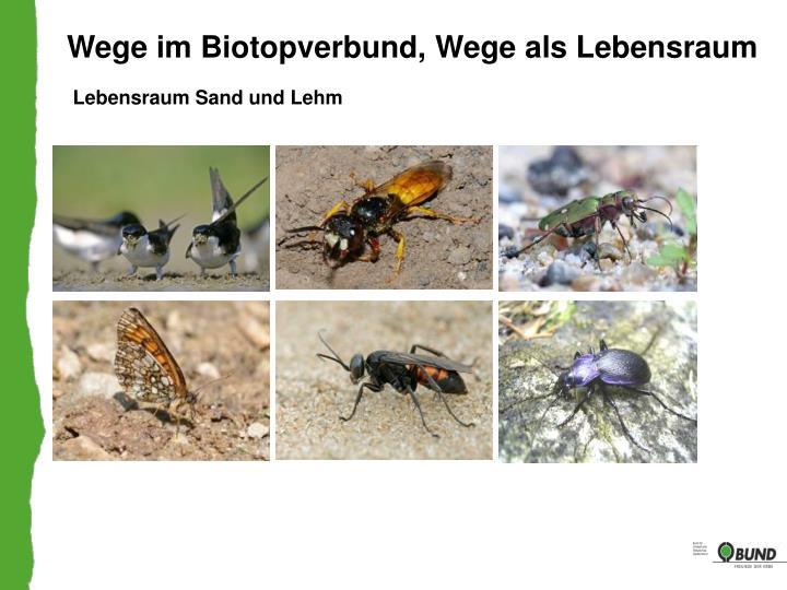 Wege im Biotopverbund, Wege als Lebensraum
