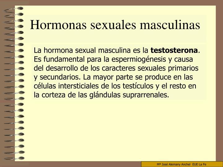 Hormonas sexuales masculinas