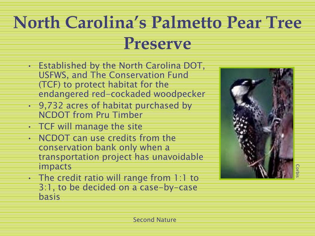 North Carolina's Palmetto Pear Tree Preserve