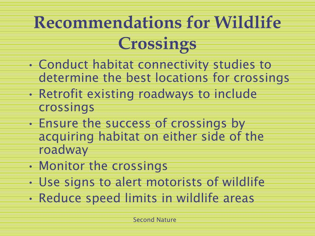 Recommendations for Wildlife Crossings