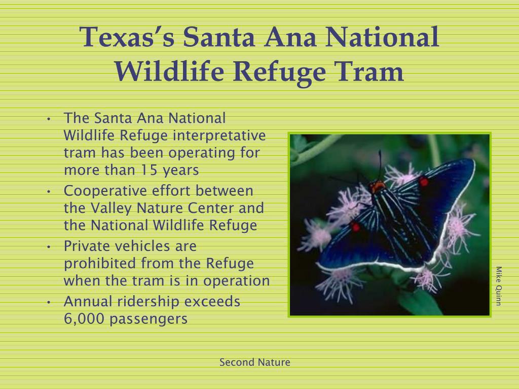 The Santa Ana National Wildlife Refuge interpretative tram has been operating for more than 15 years