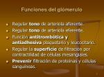 funciones del gl merulo