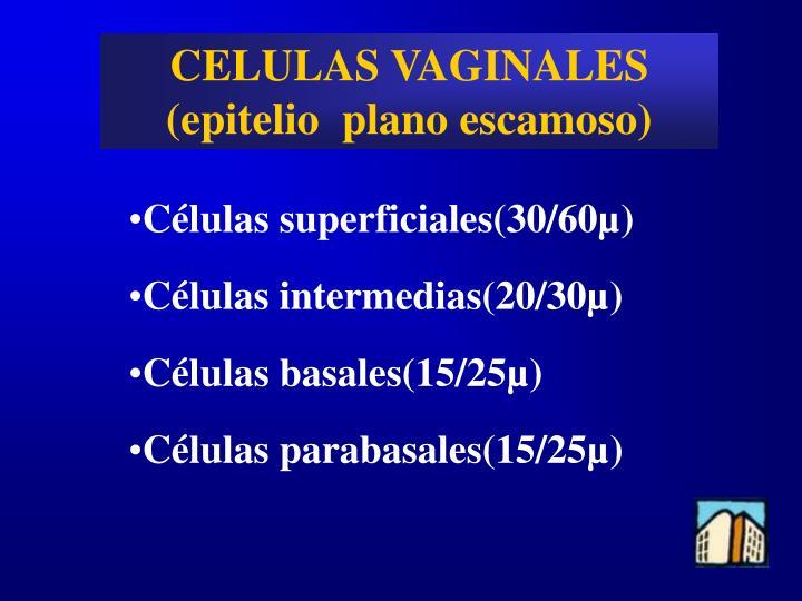 CELULAS VAGINALES