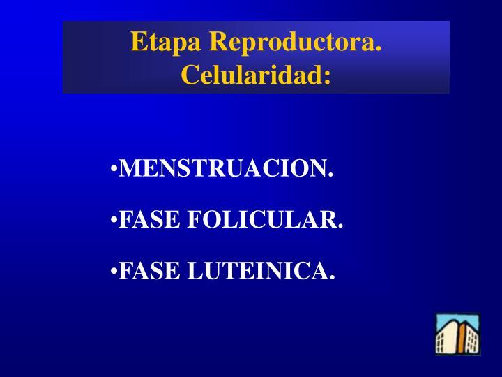 Etapa Reproductora.