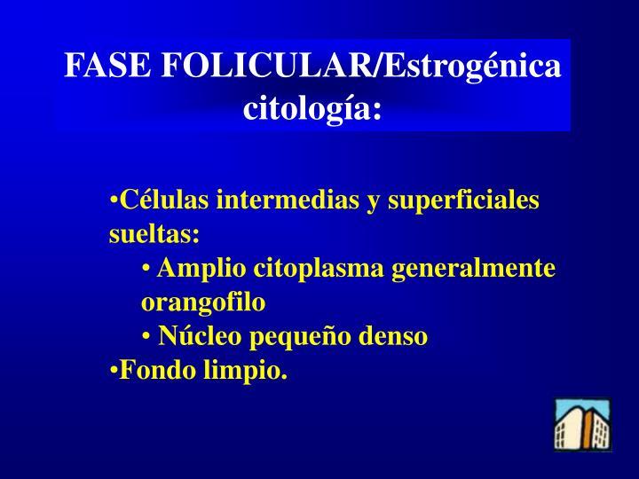 FASE FOLICULAR/Estrogénica
