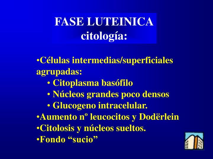FASE LUTEINICA