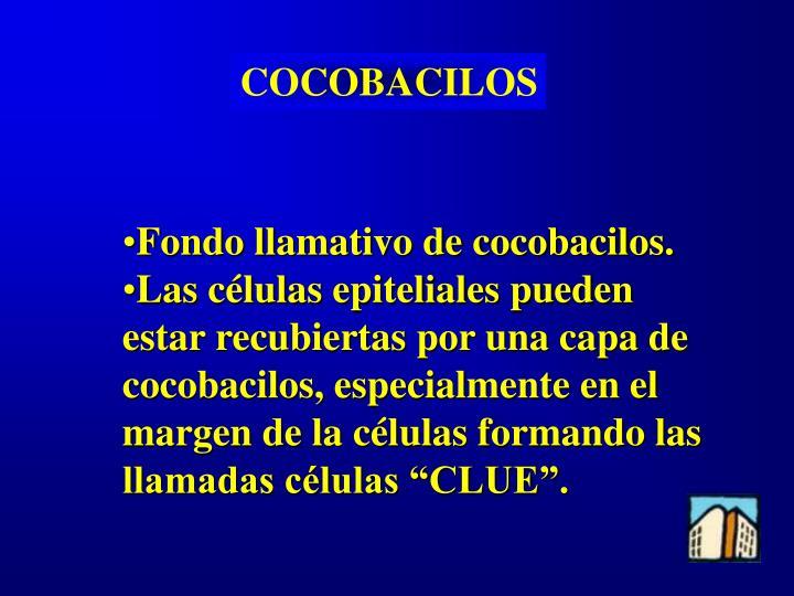COCOBACILOS