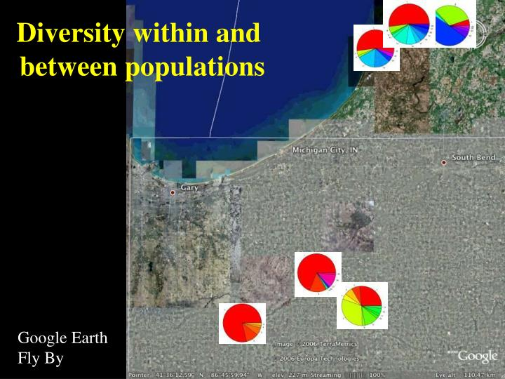 Diversity within and