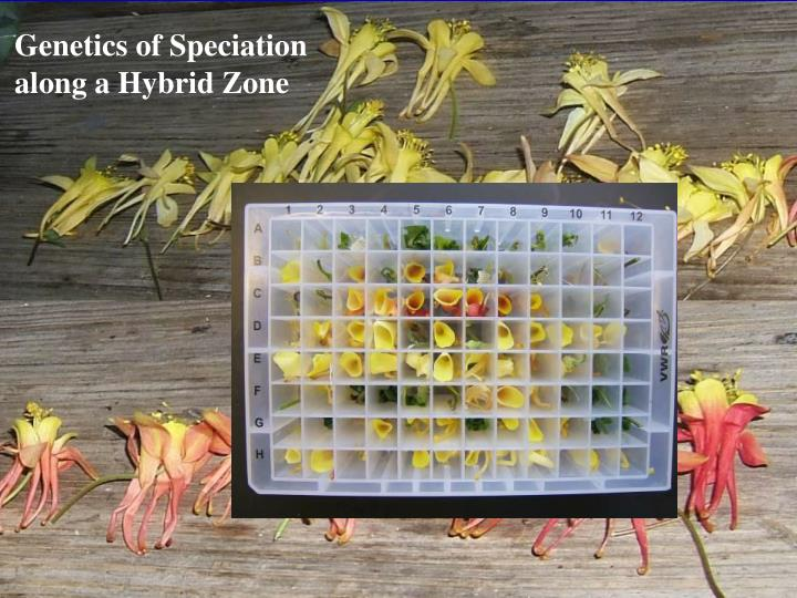 Genetics of Speciation