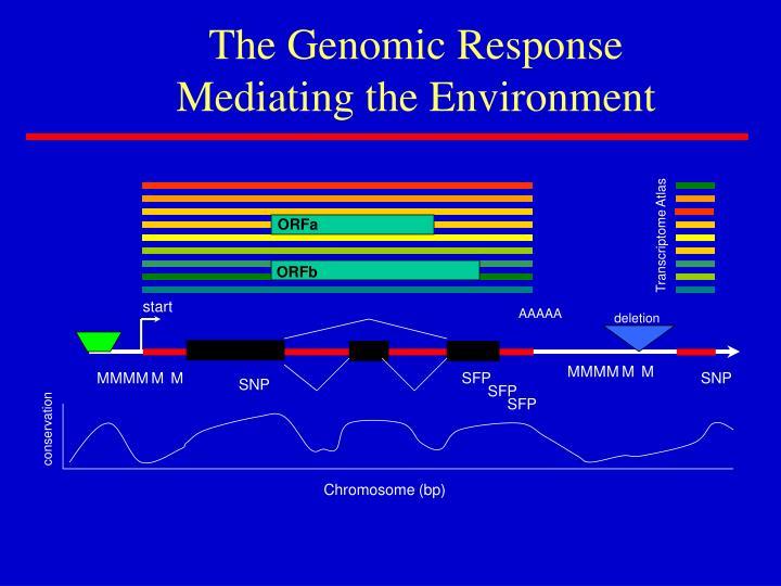 The Genomic Response