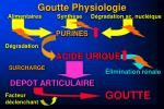 goutte physiologie3