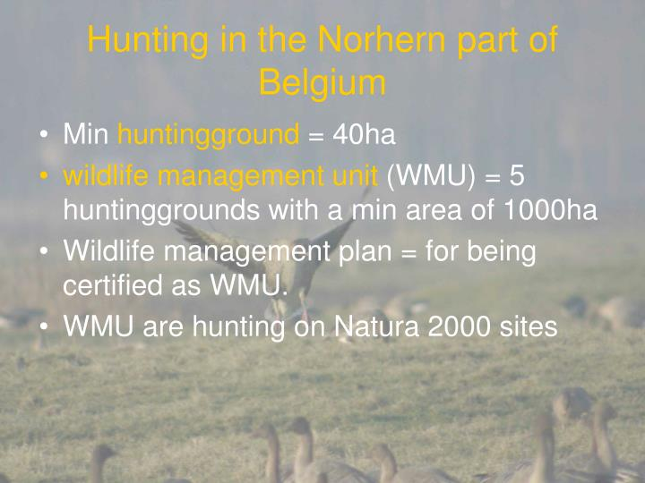 Hunting in the Norhern part of Belgium