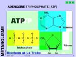 ad nosine triphosphate atp