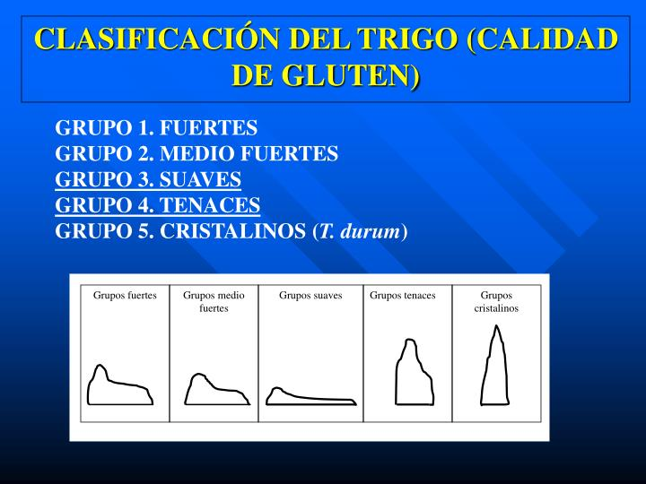 Clasificaci n del trigo calidad de gluten