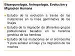 bioarqueolog a antropolog a evoluci n y migraci n humana