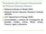 participantes del consorcio internacional del proyecto genoma humano