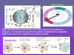 control del ciclo celular1