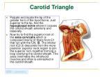 carotid triangle1