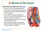 nerves of the larynx1