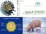 grippea h1n1