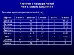 anatomia e fisiologia animal aula 3 sistema esquel tico19