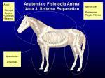 anatomia e fisiologia animal aula 3 sistema esquel tico7