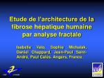 etude de l architecture de la fibrose h patique humaine par analyse fractale