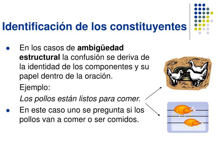 Identificación de los constituyentes
