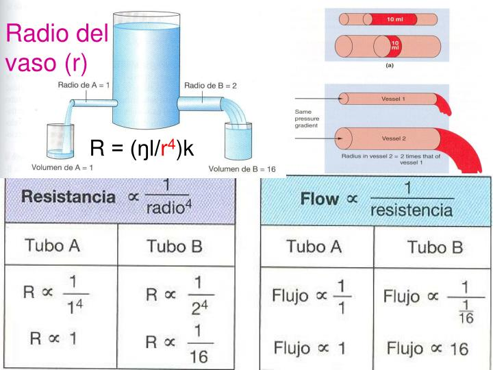 Radio del vaso (r)