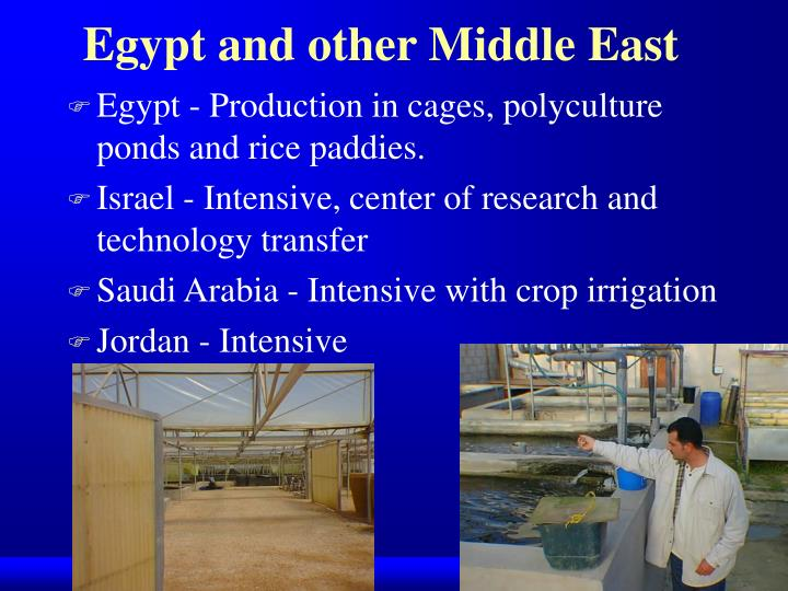 Egypt and other Middle East