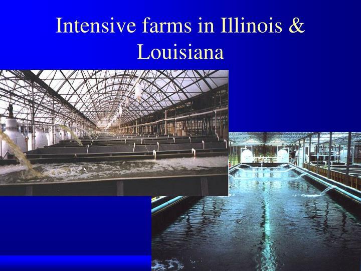 Intensive farms in Illinois & Louisiana
