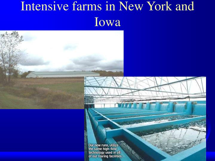 Intensive farms in New York and           Iowa