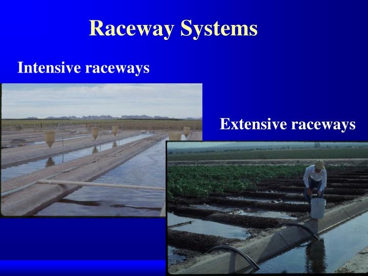 Raceway Systems