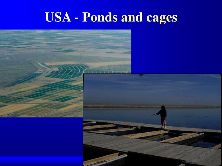 USA - Ponds and cages