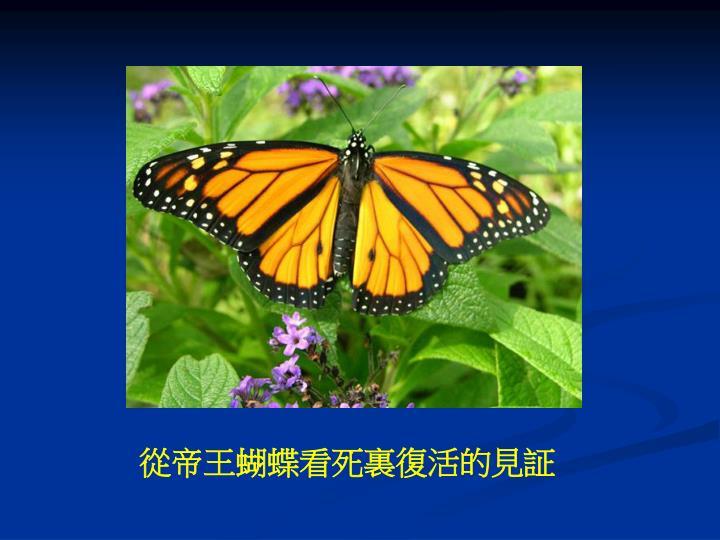 從帝王蝴蝶