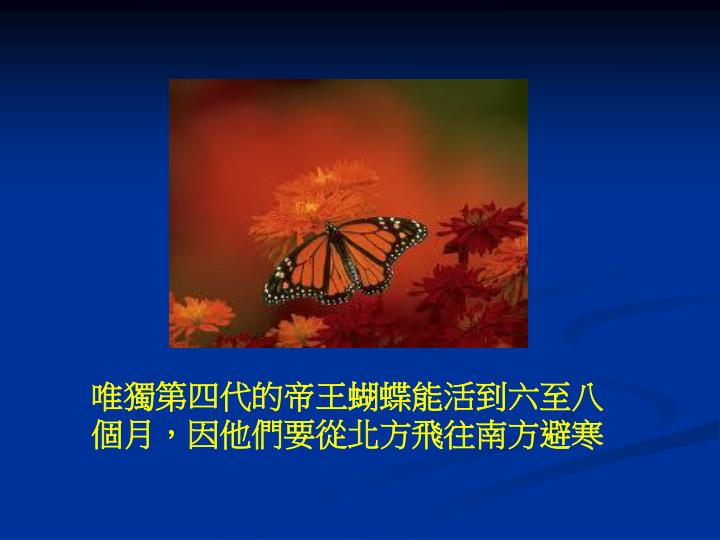 唯獨第四代的帝王蝴蝶能活到六至八個月,因他們要從北方飛往南方避寒
