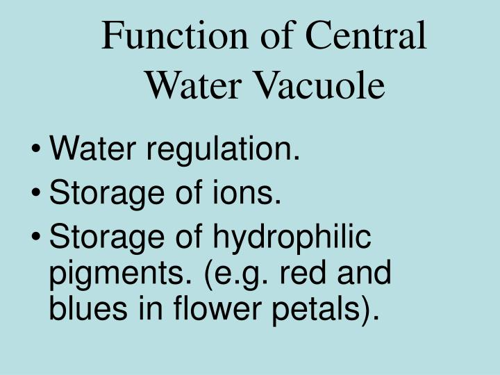 Function of Central Water Vacuole