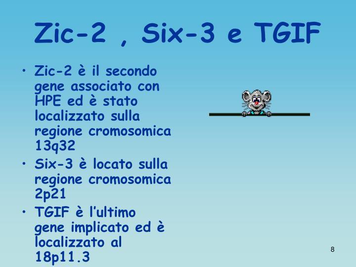 Zic-2 , Six-3 e TGIF