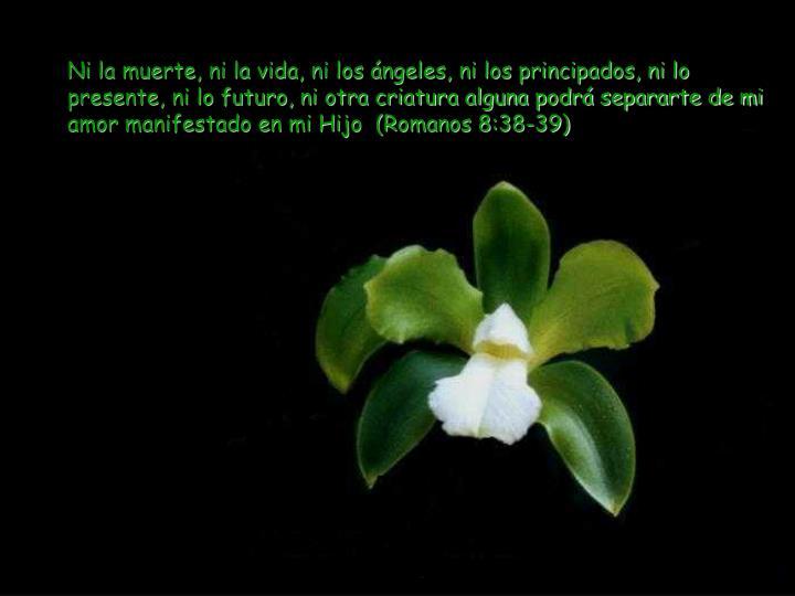 Ni la muerte, ni la vida, ni los ángeles, ni los principados, ni lo presente, ni lo futuro, ni otra criatura alguna podrá separarte de mi amor manifestado en mi Hijo  (Romanos 8:38-39)