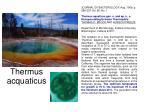 thermus acquaticus