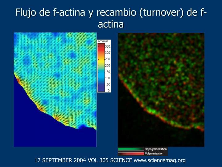 Flujo de f actina y recambio turnover de f actina