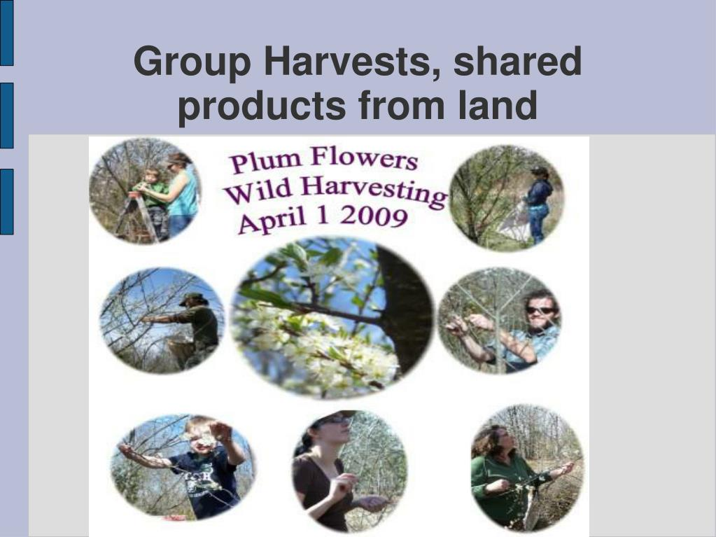 Group Harvests, shared products from land