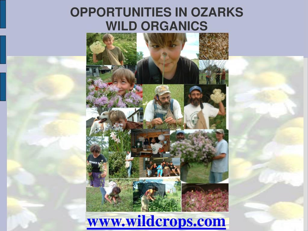 opportunities in ozarks wild organics l.