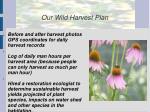 our wild harvest plan