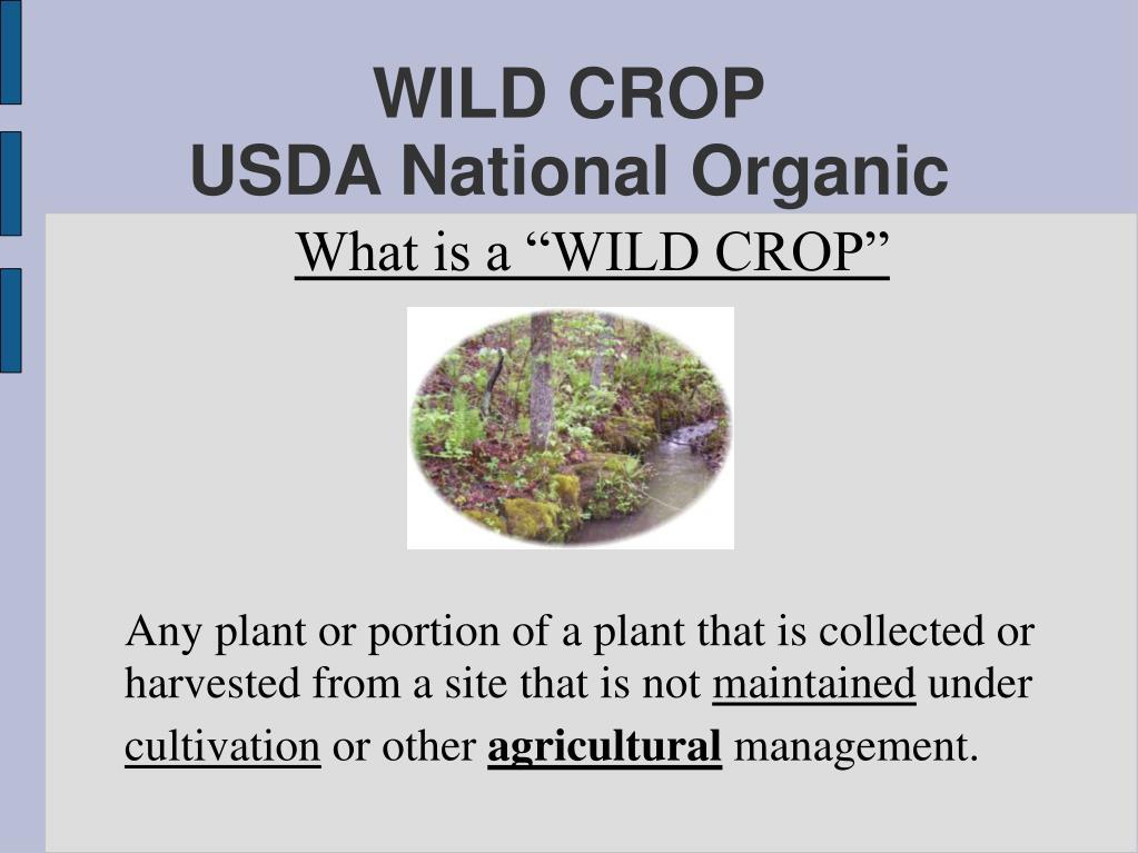 WILD CROP