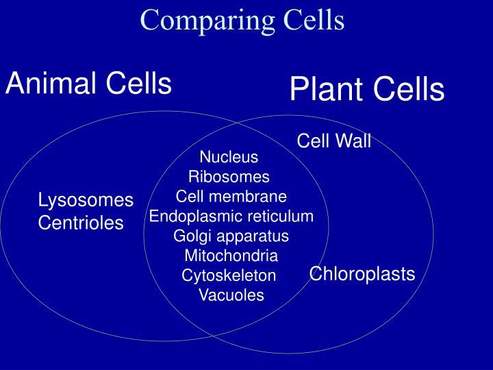 Comparing Cells