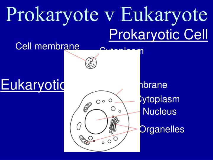 Prokaryote v Eukaryote