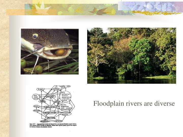 Floodplain rivers are diverse