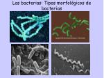 las bacterias tipos morfol gicos de bacterias