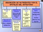 absorci n de nutrientes por el epitelio del intestino